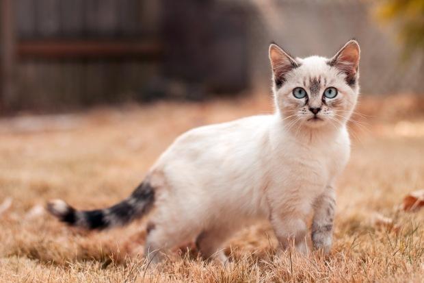 rastreador-de-gatos